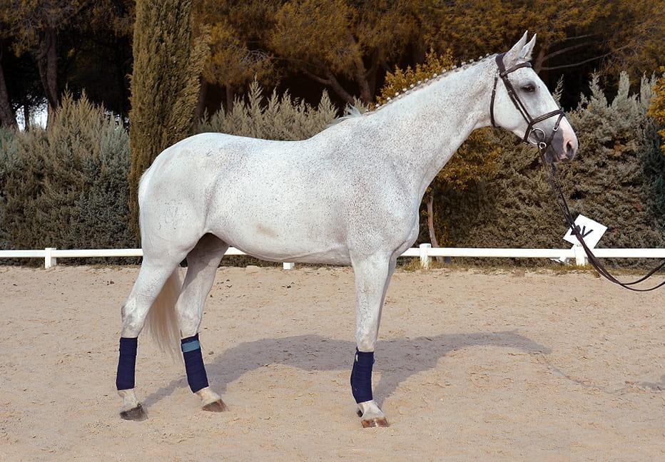 Unique-phr-equestrian