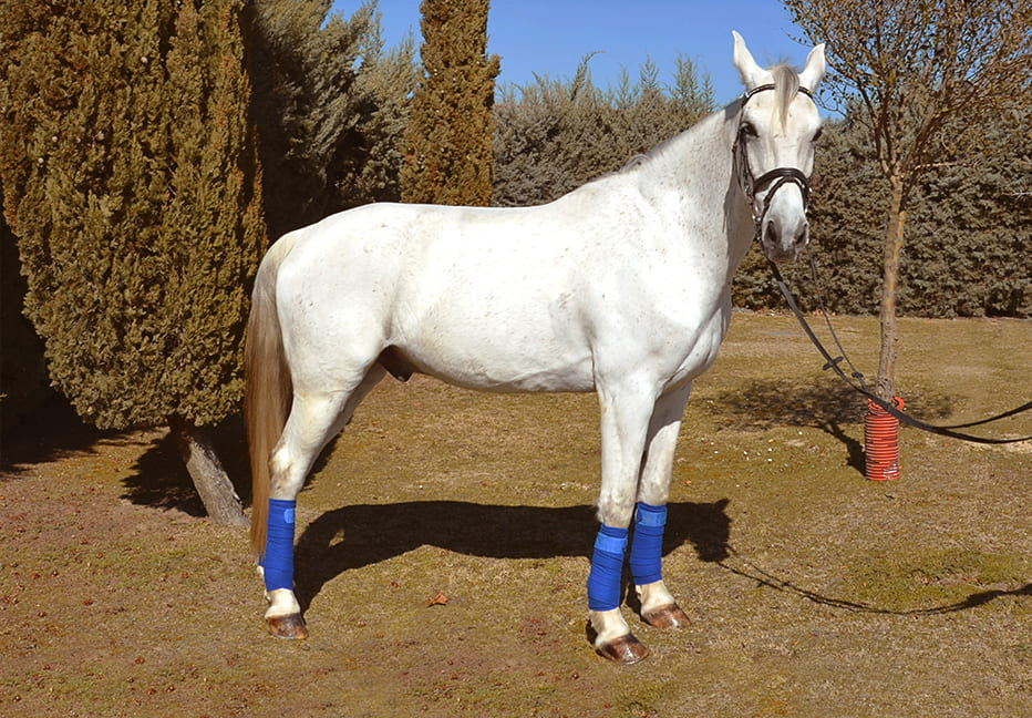 ghorebeet-phr-caballo