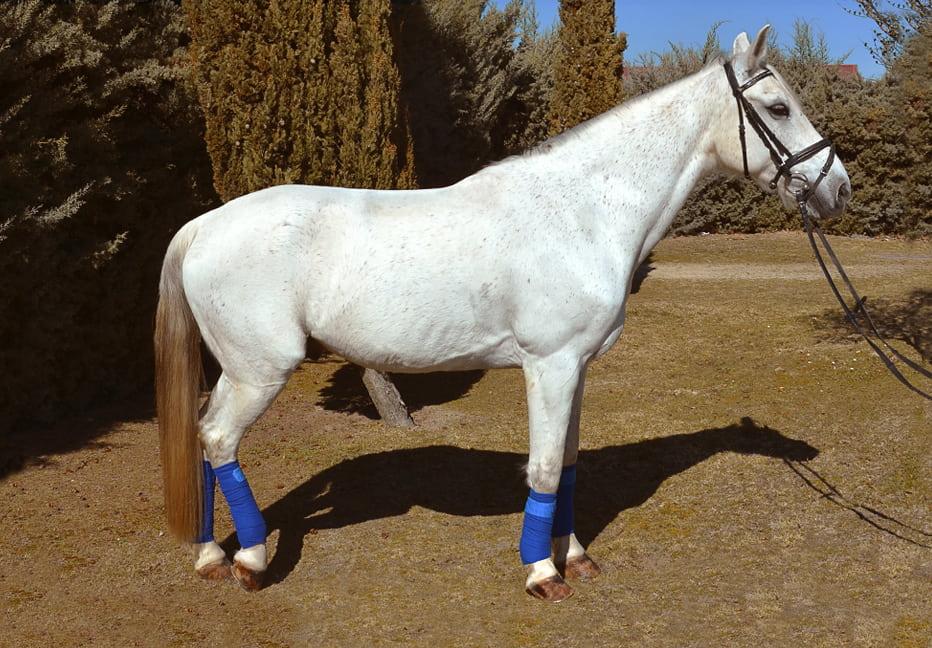ghorebeet-phr-caballo3