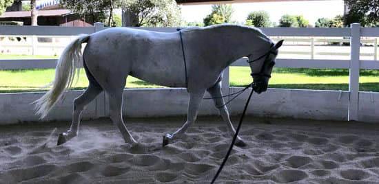 Mantener los caballos sanos en la cuarentena