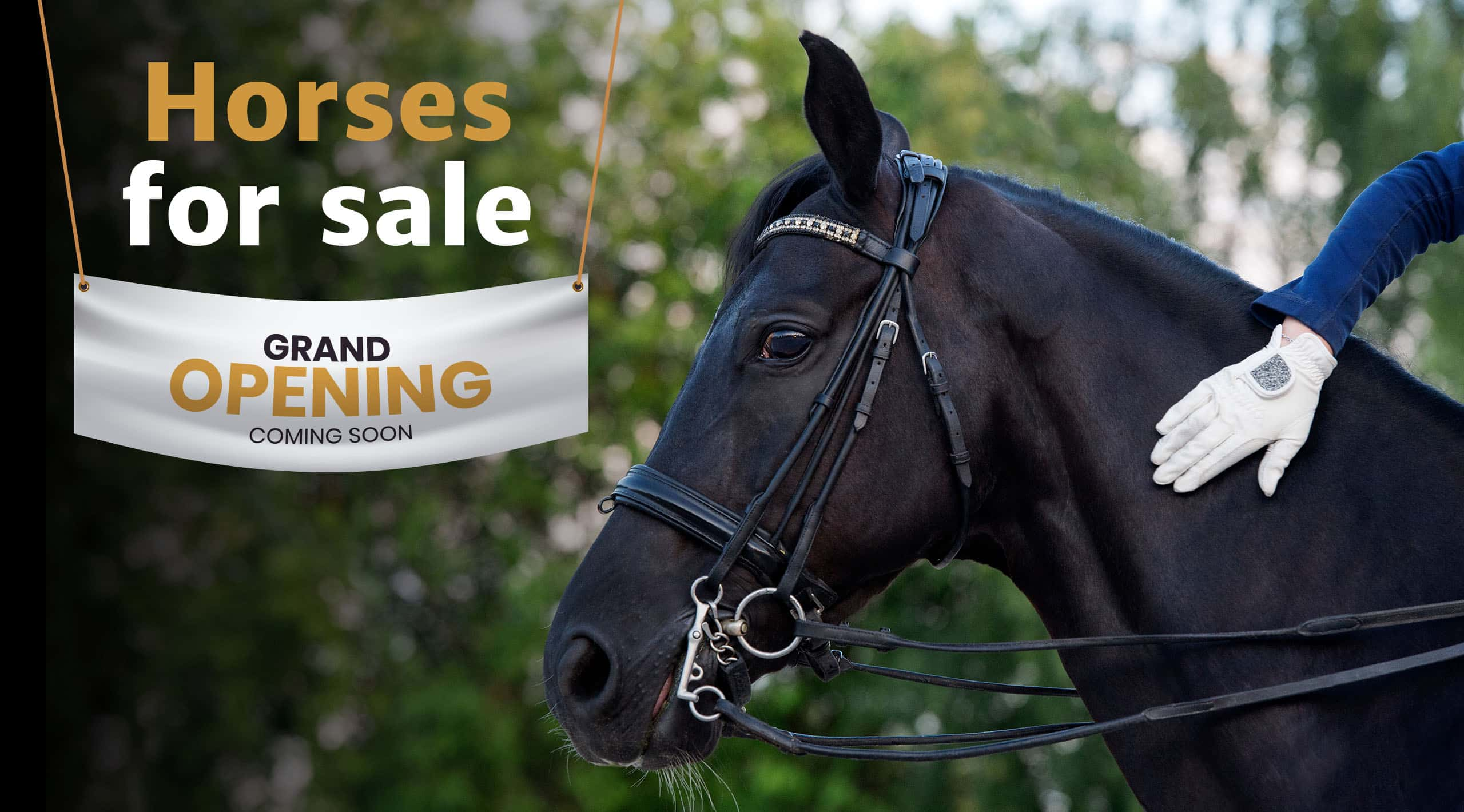 horses-for-sale-phr