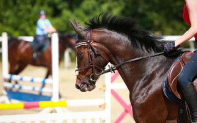 PHR imparte clases de equitación para todas las edades y todos los niveles