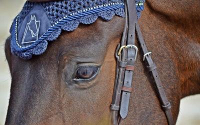 """¿Cómo será la """"nueva normalidad"""" en la equitación?"""