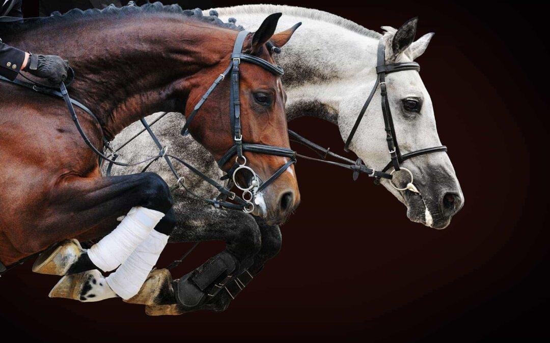 Escuela de Hípica PHR caballos saltando